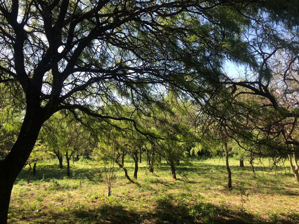 Terreno y lote en Venta en el Golf de Villa Allende